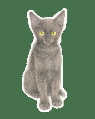 ミニスライダー7 塗らずに描く色鉛筆画 講師 黒猫PRADA