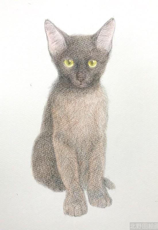塗らずに描く色鉛筆画 講師 黒猫PRADA 6