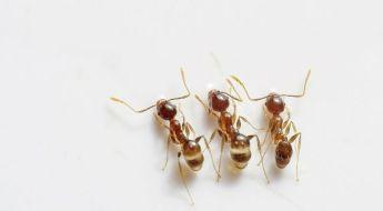 skruzdelynas