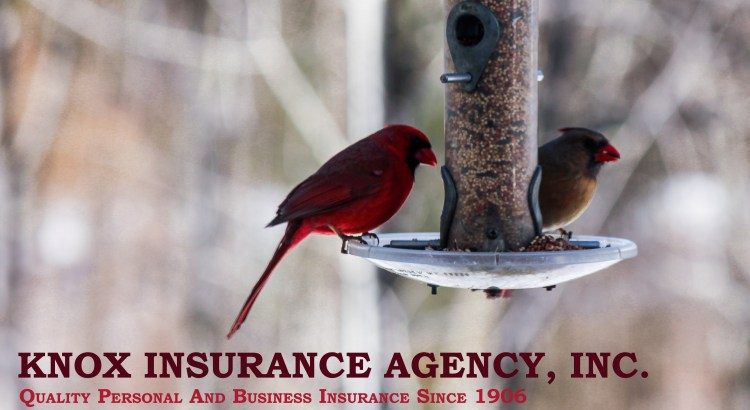 Knox Insurance Agency, Inc. - Quality NY Insurance Since 1906