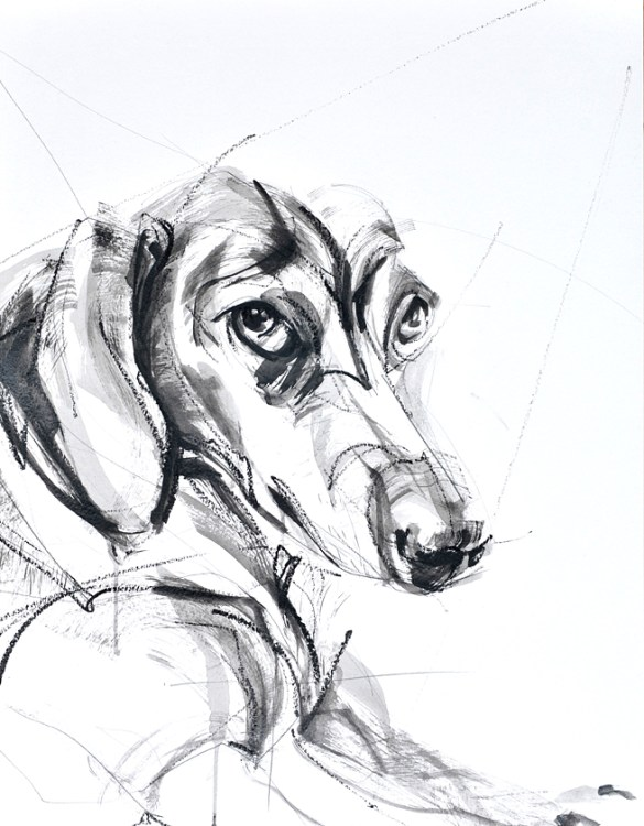 Tekkel / Dachshund | charcoal and acrylic on paper | 70x80 cm | 400€