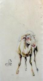Sheep Oveja
