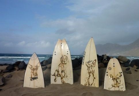 koetziervanhooff Surf Dog