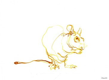 Yellow rat | Ink drawing on paper | A3 | 175€
