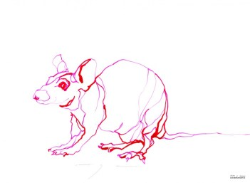 Red Mouse 2 | Ink drawing on paper | A3 | 175€