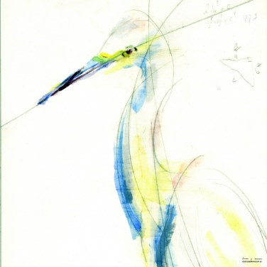Cattle / White Egret | Available in print in various sizes and material, please send email for information.