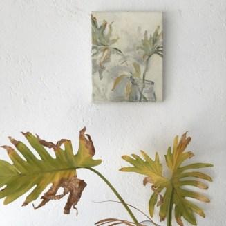 Famara Plant (Fatsia Japonica)   20x30 cm   495,-