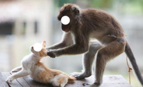 setubuh dengan binatang