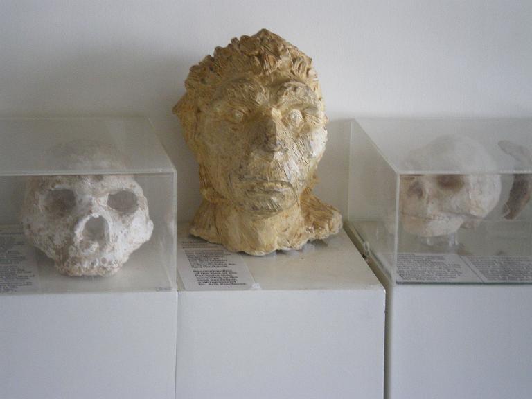 archanthrope skulls