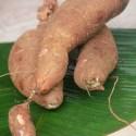Kappa Stew – Ishtu Recipe | Tapioca Stew Recipe – Kerala Style