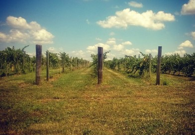 Kansas Wine: Somerset Wine Trail