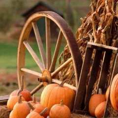 35th Annual Harvest Festival at the FUMC Saturday
