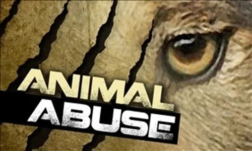 Sullivan County sheriff opens up about animal abuse case near Milan