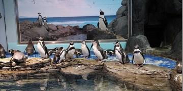 韓國景點 充滿歡樂與驚喜 首爾最大AQUA PLANET一山海之星水族館