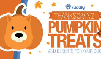 Thanksgiving Pumpkin Dog Treats
