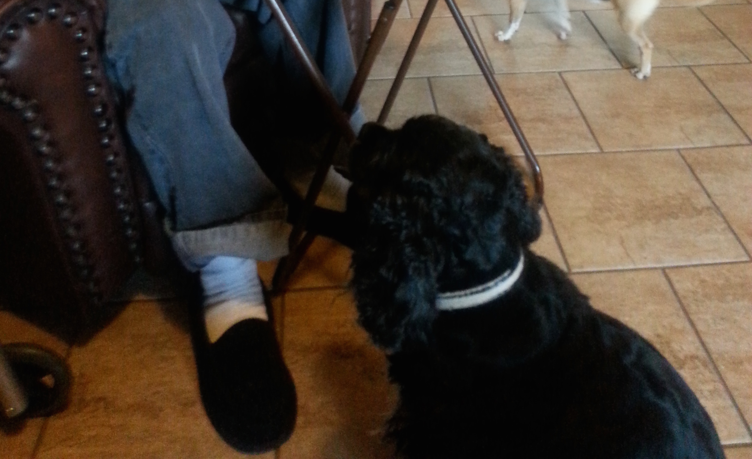 two dogs under a table