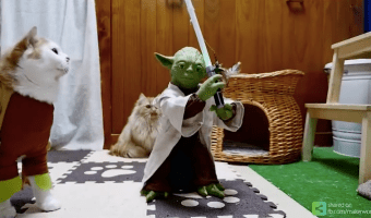 7 Pet Parodies on Star Wars to Make you Laugh