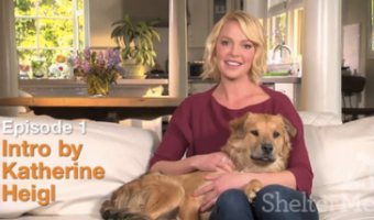 Celebrate the Human-Animal Bond! Check Out ShelterMe