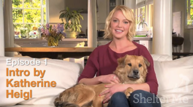 ShelterMe Katherine Heigl
