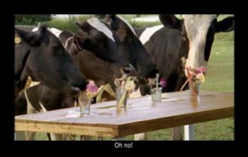 Lembu minum banyak air, hasilkan banyak susu kata Tokwan