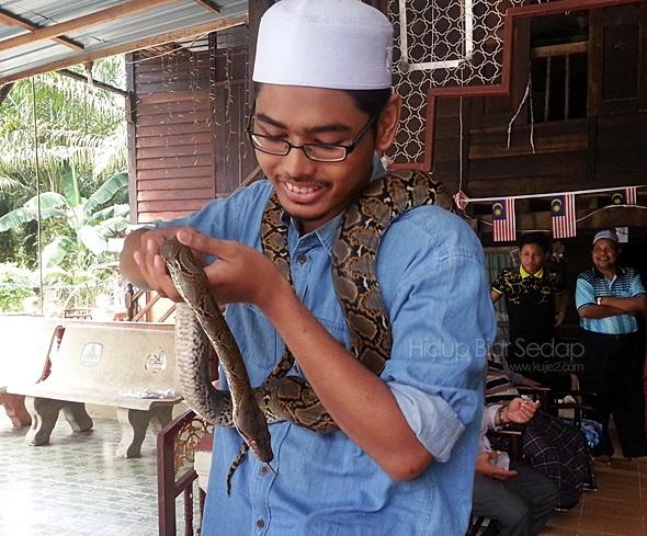 ular sawa