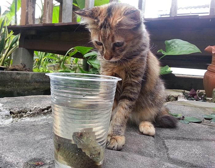 kucing tengok ikan