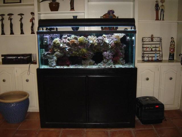 Best Reef Tank