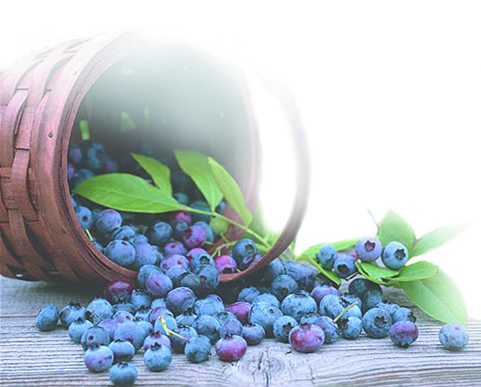 blueberry_700img
