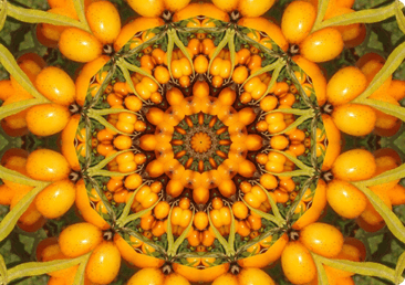 fruit-mandala_hp.png