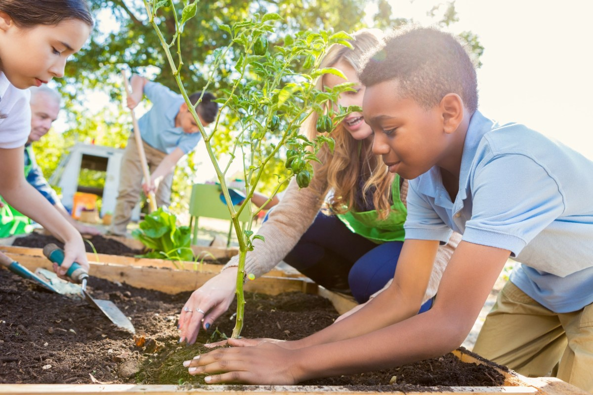 Elementary age students are working in school garden, planting vegetables and learning about plant life. Teacher is instructing students during outdoor science class. Children are wearing private school uniforms.