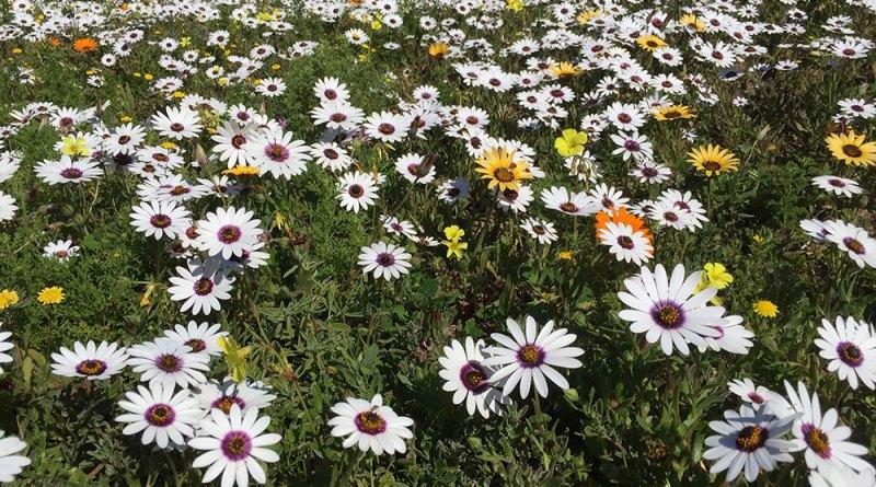 Postberg Flowers