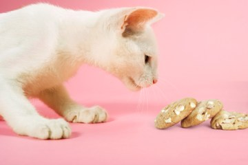 jiu_rf_photo_of_cat_sniffing_macadamia_nut_cookie