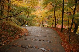 Best_Autumn_Viewing_Spots_in_Kyoto