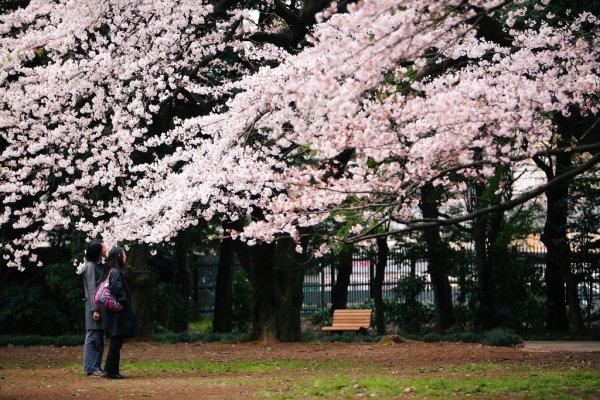 Shinjuku_Gyoen_Garden_Tokyo