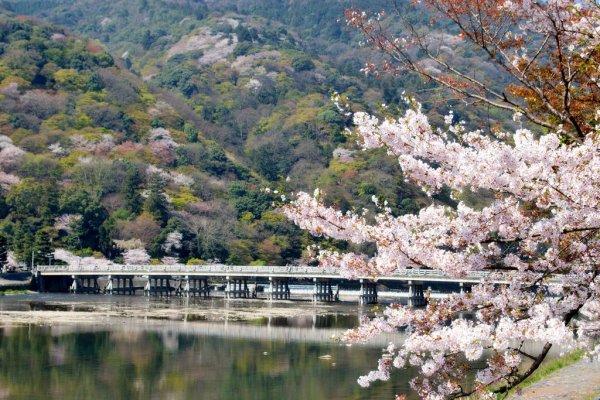 arashiyama_cherry_blossoms_japan