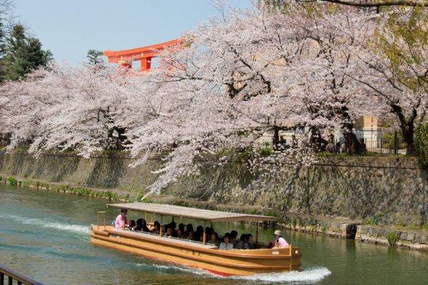 okazaki_canal_cherry_blossoms_kyoto