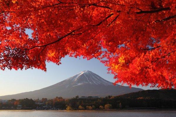 mount_fuji_and_autumn_leaves_lake_kawaguchi_japan