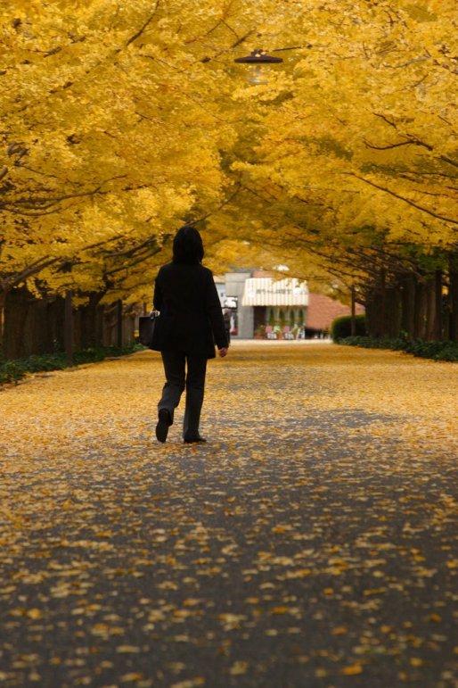 showa_kinen_park_ginkgo_leaves