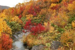 mount_hakkoda_autumn_beauty