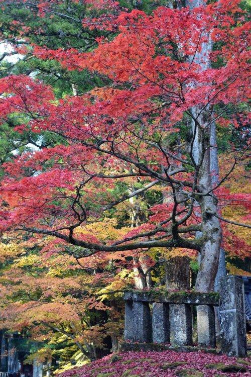 autumn_foliage_in_nikko