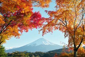 autumn_leaves_and_mount_fuji_fujikawaguchiko_yamanashi_japan