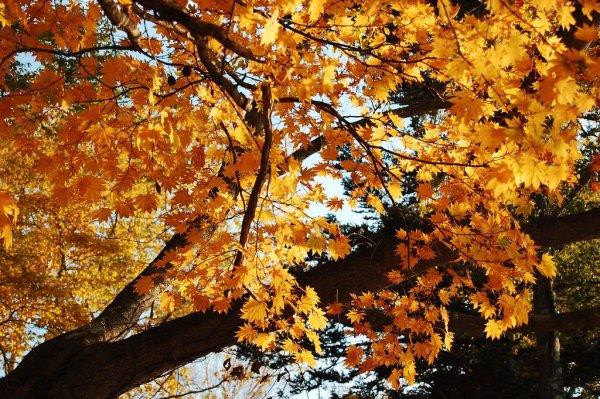 autumn_nature_nikko