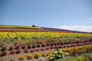 hokkaido_flower_farm