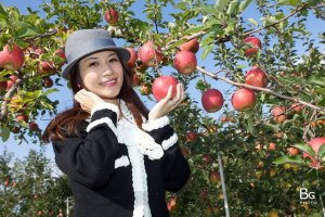 apple_farm_in_hirosaki_aomori_japan