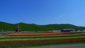 tulip_field_kamiyubetsu_tulip_park