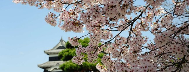 10 Great Japanese Castles to Visit during Hanami Season