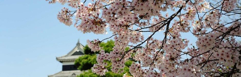 10 Great Japanese Castles to Visit during Hanami Season