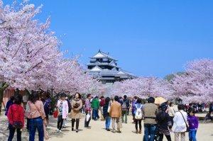 sakura_matsuyama_castle_japan