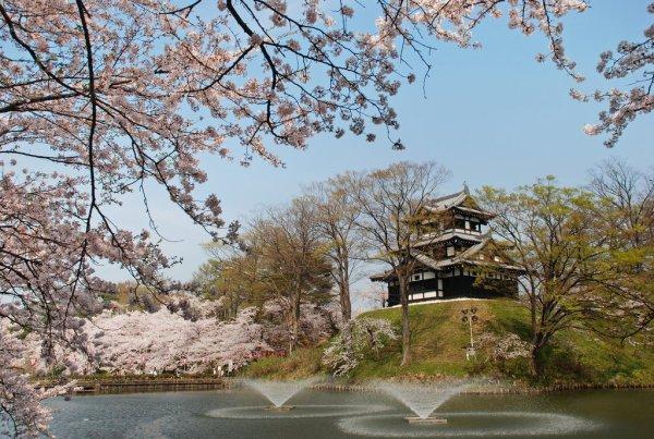 takada_castle_cherry_blossom_japan