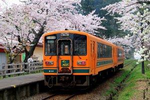 train_ashino_park_sakura